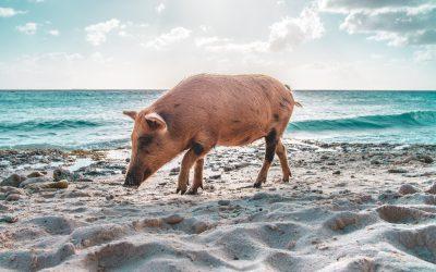 Wie überwinde ich meinen Schweinehund? – die Tipps meiner Lieblingsblogger!